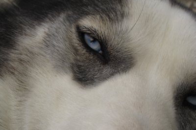 Beautiful Blue Eye