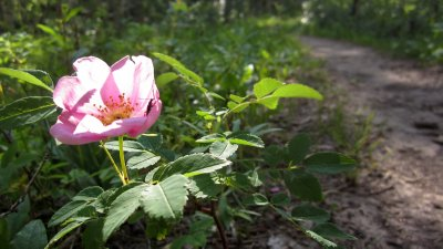 Trailside Flower