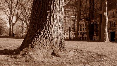 Textured Trees