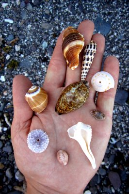 A Handful of Shells
