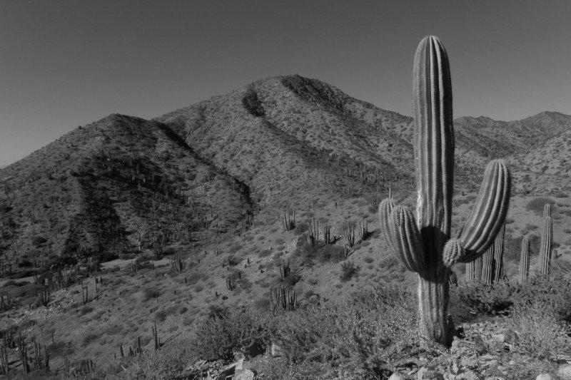 Desert Landscape of Catalina