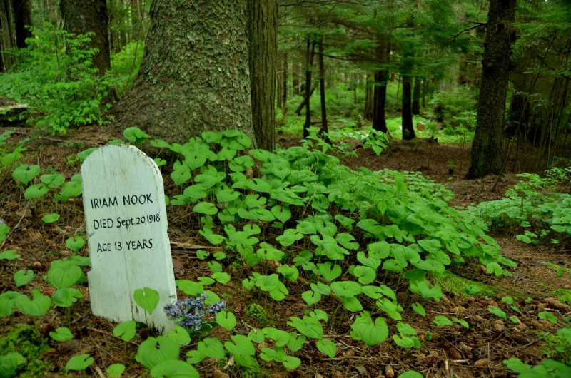 A Forest Cemetery