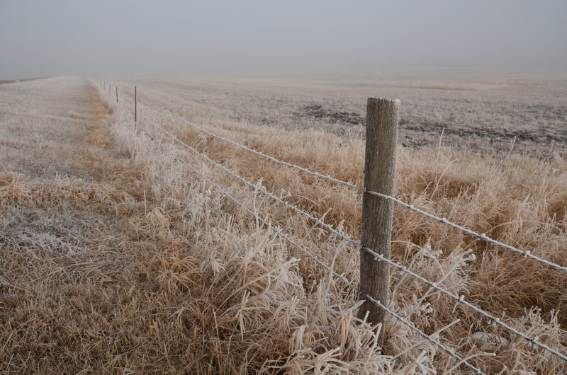 Frozen Fenceline