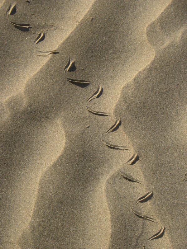 Snake on Sand