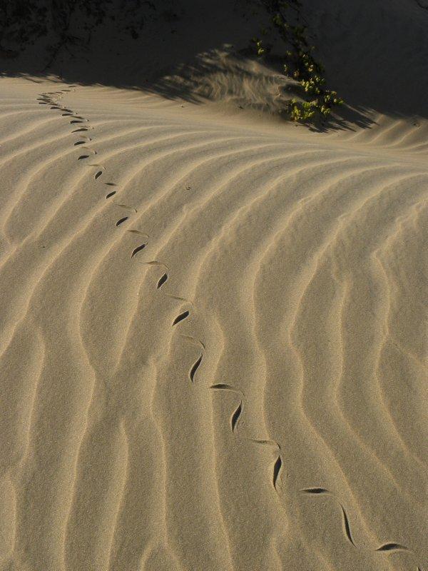 Snake Tracks on Sand Lines