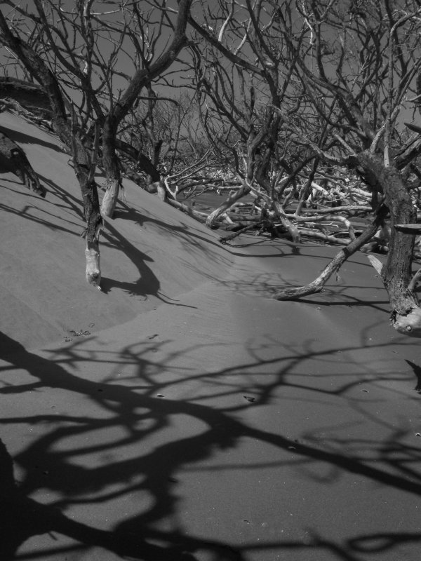 Shadows of Mangroves