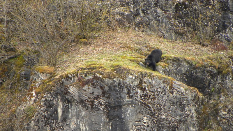 Interested Black Bear