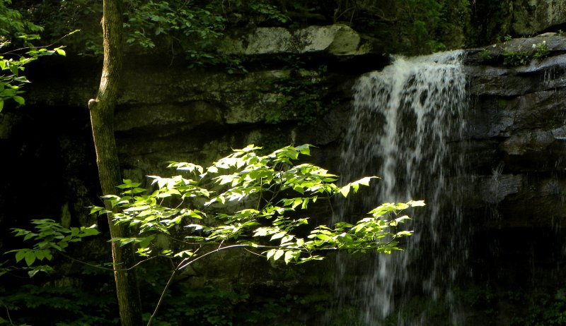 Waterfall and Foliage