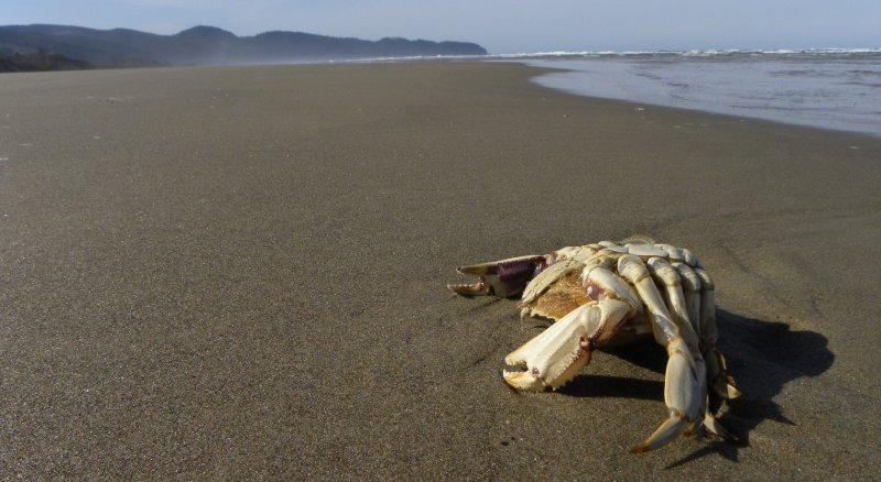 Crab in Death