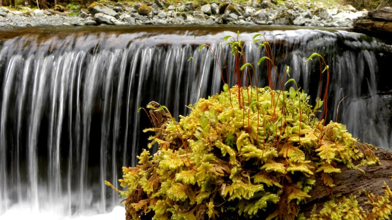 Moss and Cascades