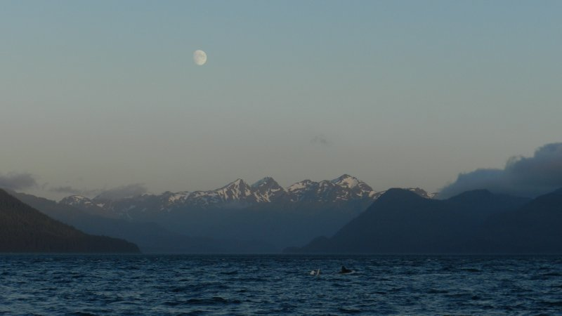 Frolicing Humpback under the moon