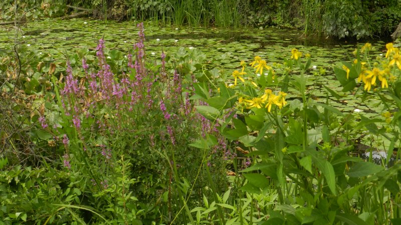 Wetland Variety