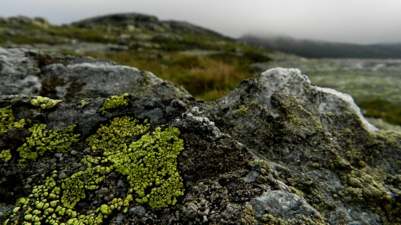 Green Lichen Green Mountain