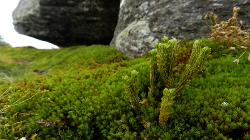 Moss and Boulders