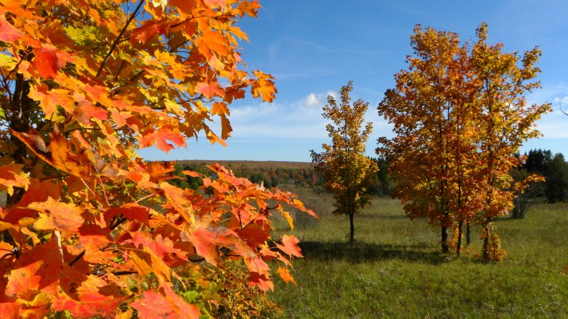 Orange Maples of the Valley