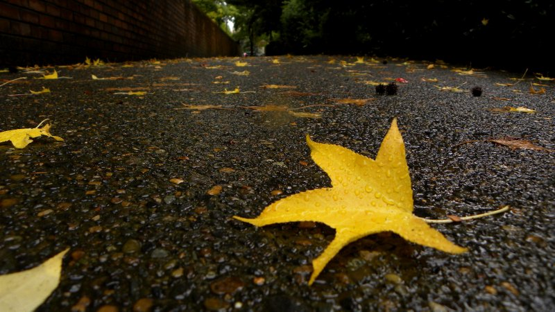 Leaf Strewn Sidewalk