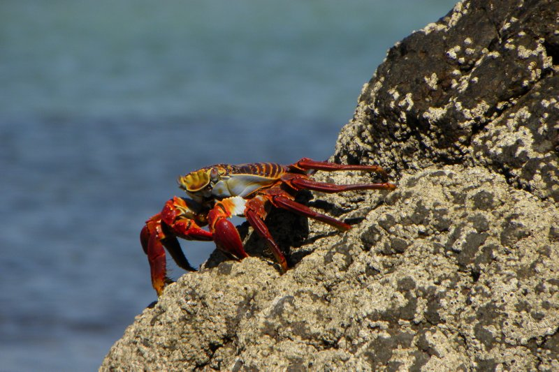 Vivid Crab on the Rock
