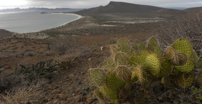 Prickly Pear and Bonanza Bay