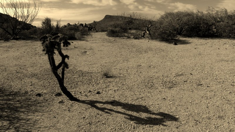 Cholla and Shadow