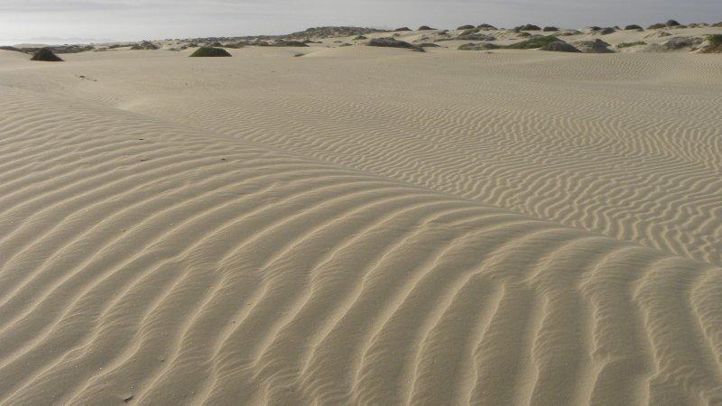 Dune Lines
