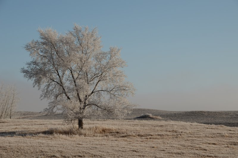Frosted Tree under Sunny Skies