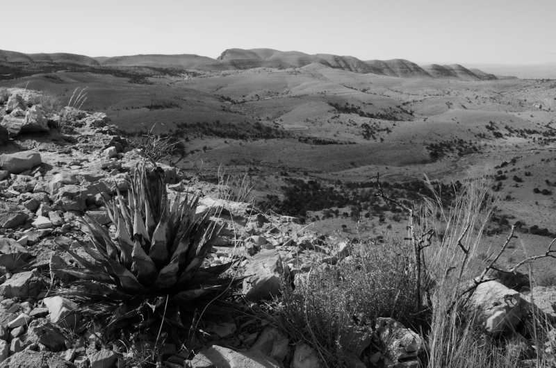 Agave and West Dog Canyon
