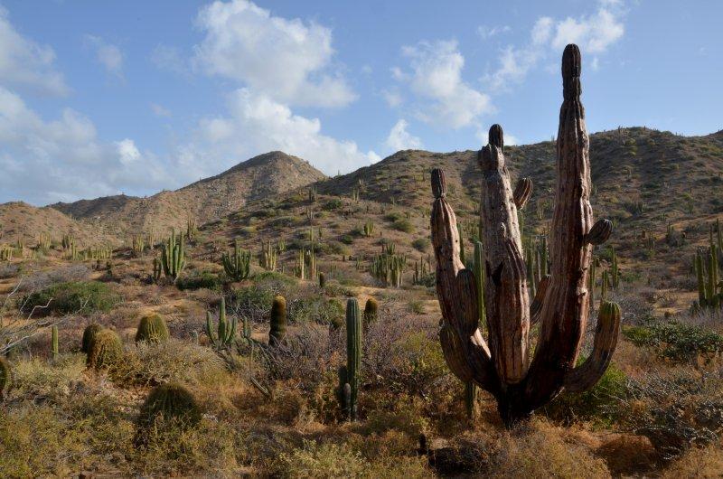 Desert Landscape in Color