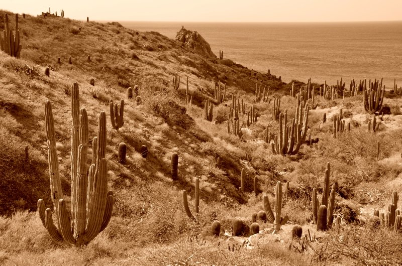 Catalina Landscape