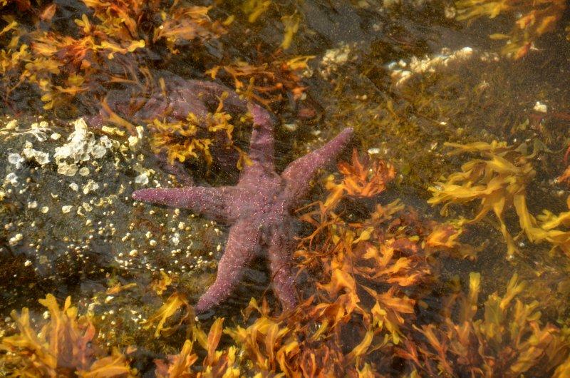 Sea Star on Green