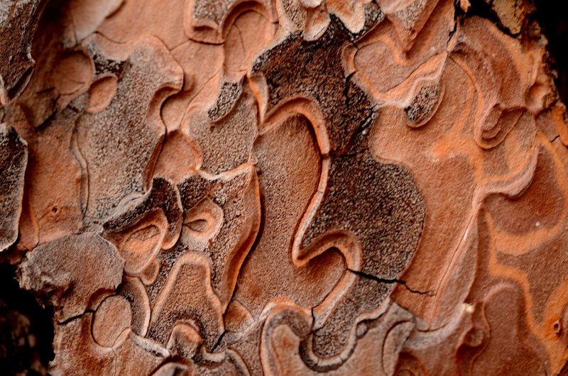 Pine Bark Detail