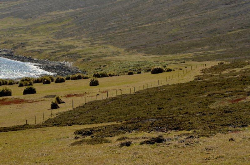 Carcass Island Landscape