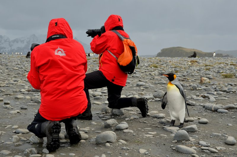 Curious Penguin, Oblivious Photographers