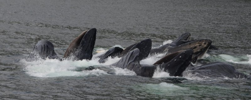 The Surge of Whales