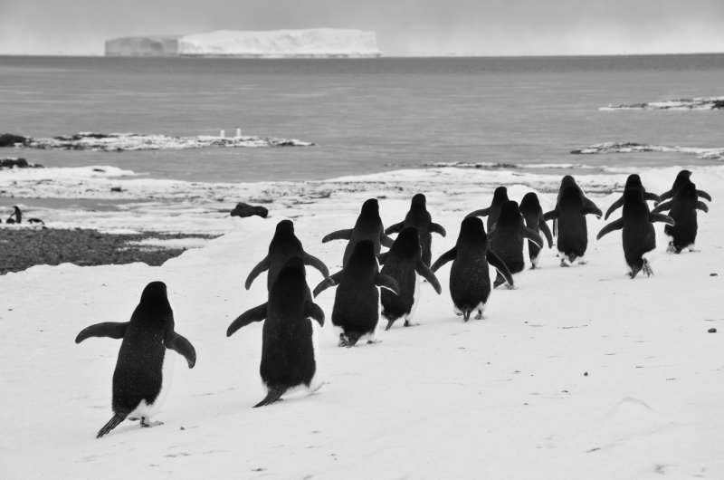 Penguins and Icebergs