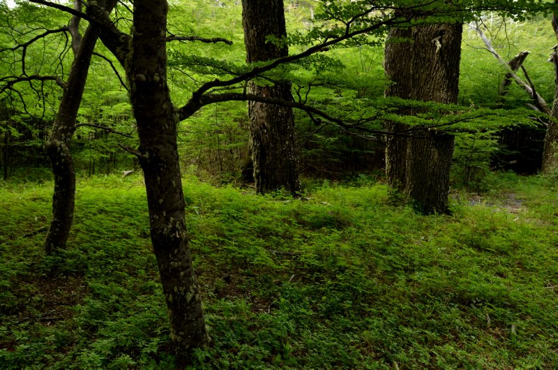 Green Forest Scene