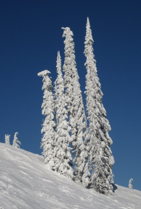 White Trees on Blue Sky