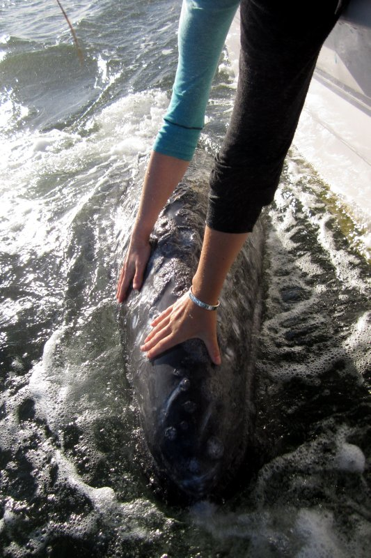 Gray Whale Moments
