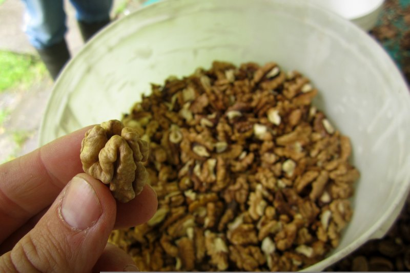 The Good Nuts