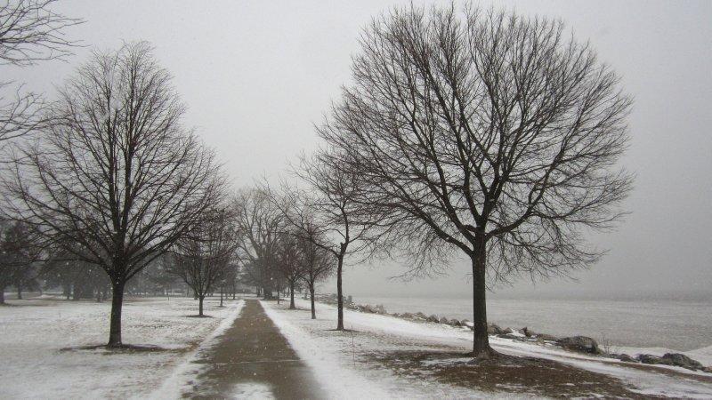 Gray Park Scene