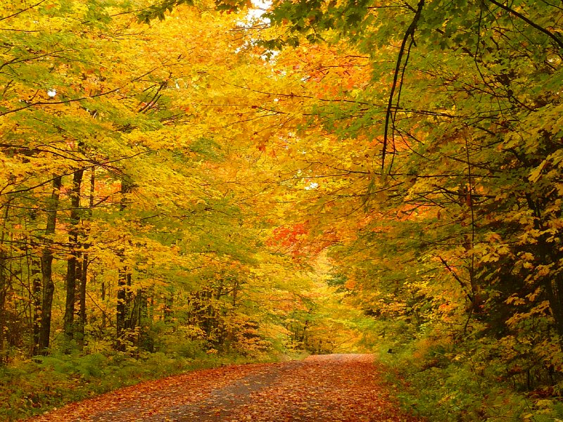 North Shore Fall Colors