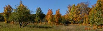 orange tree hill
