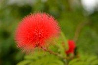 Puffed Flower