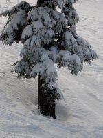 Pine Tree Detail