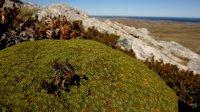 Native Plants of the Falklands