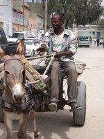 Donkeys for everything