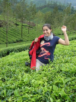 Tea collector