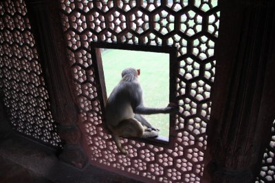 A friend called monkey