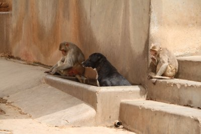 El perrito con los monos ;-)