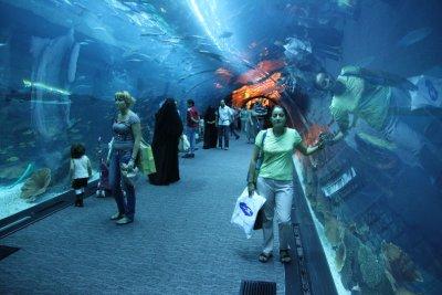 Túnel de aquario