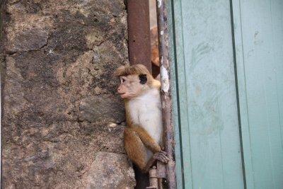 Mono peinado